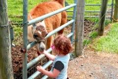 1_feeding-a-llama