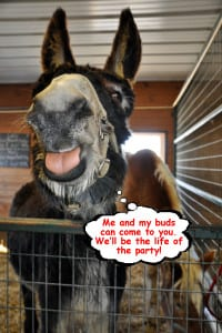 donkey talking