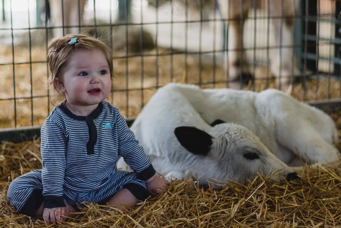 Green Meadows Petting Farm Calf
