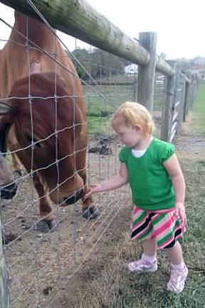Green Meadows Petting Farm Red Bull