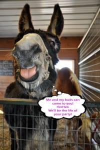 donkeytalking