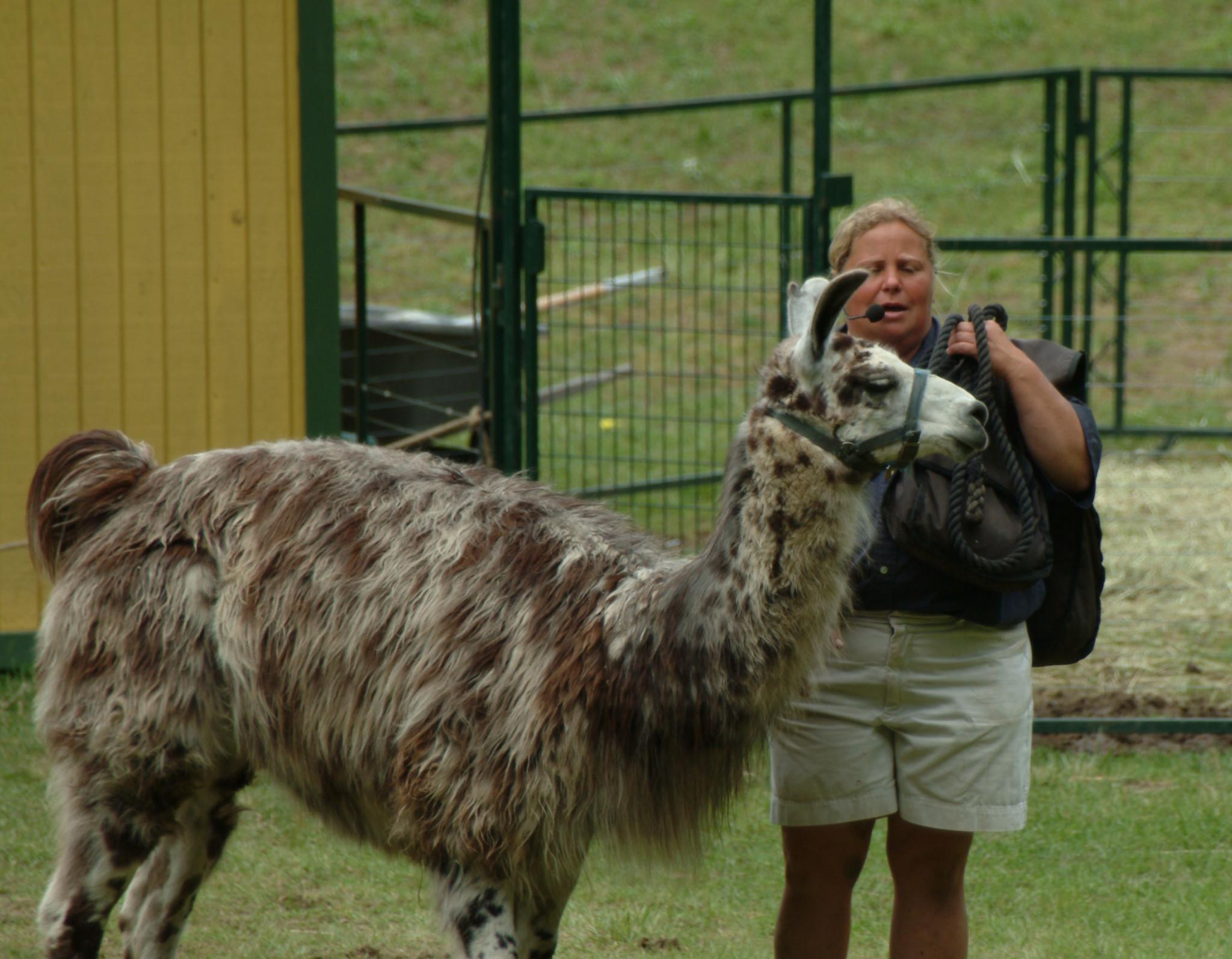 fun animal show