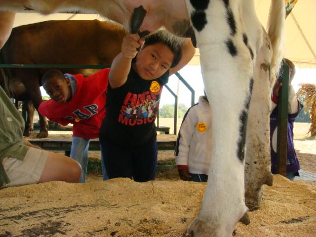 Green Meadows Farm cow milking